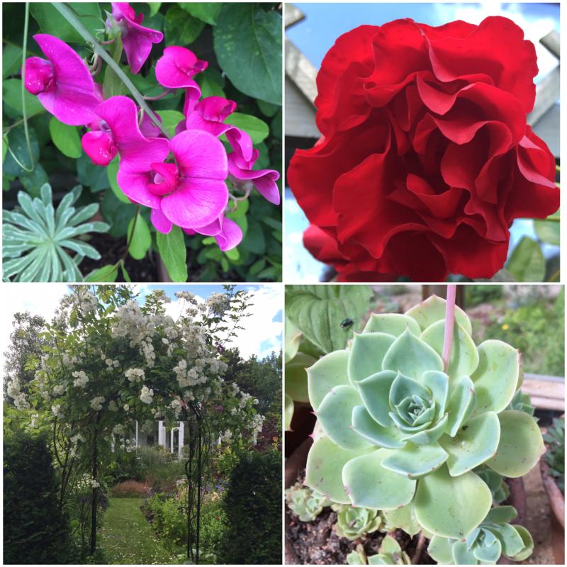 Eliz's garden 1